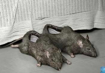 buty w kształcie myszy